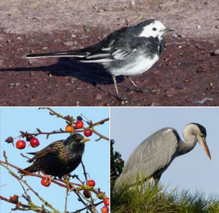 Exposition «La richesse des oiseaux à Le Rheu»